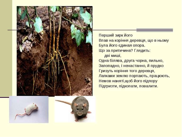 Перший зирк його Впав на коріння деревця, що в ньому Була його єдиная опора. ...