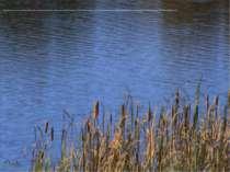 Береги Дністра, де я жив, були райськи благодатними: там росли колгоспні груш...