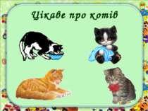 Цікаве про котів