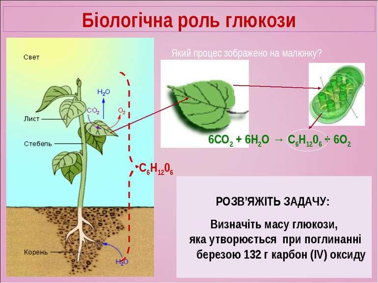 Біологічна роль глюкози Який процес зображено на малюнку? 6СО2 + 6Н2О → C6H12...
