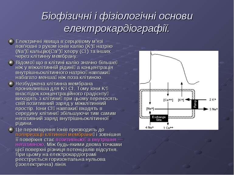 Біофізичні і фізіологічні основи електрокардіографії. Електричні явища в серц...