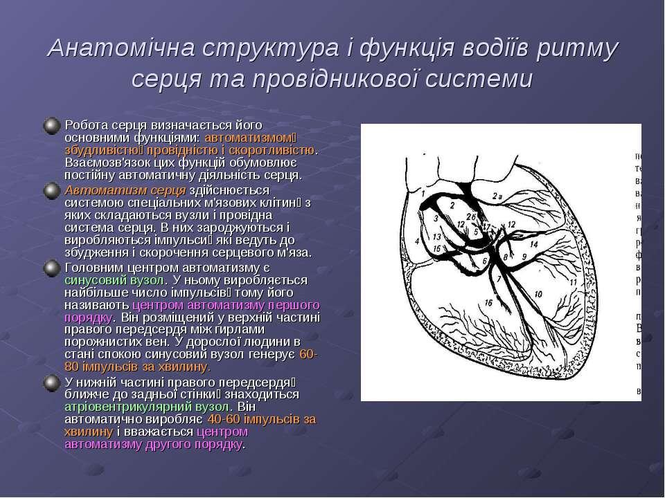 Анатомічна структура і функція водіїв ритму серця та провідникової системи Ро...