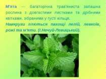 М'ята — багаторічна трав'яниста запашна рослина з довгастими листками та дріб...