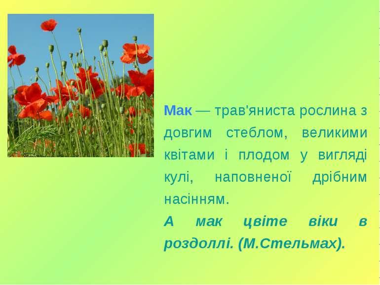 Мак — трав'яниста рослина з довгим стеблом, великими квітами і плодом у вигля...
