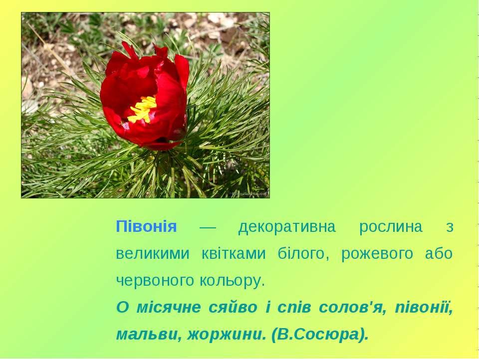 Півонія — декоративна рослина з великими квітками білого, рожевого або червон...