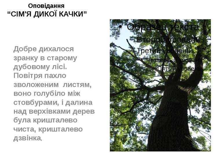 """Оповідання """"СІМ'Я ДИКОЇ КАЧКИ"""" Добре дихалося зранку в старому дубовому лісі...."""
