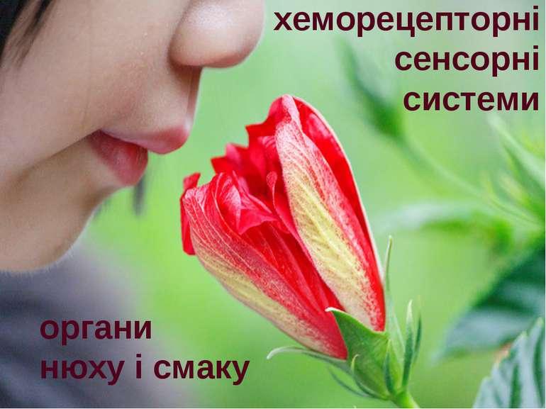 хеморецепторні сенсорні системи органи нюху і смаку