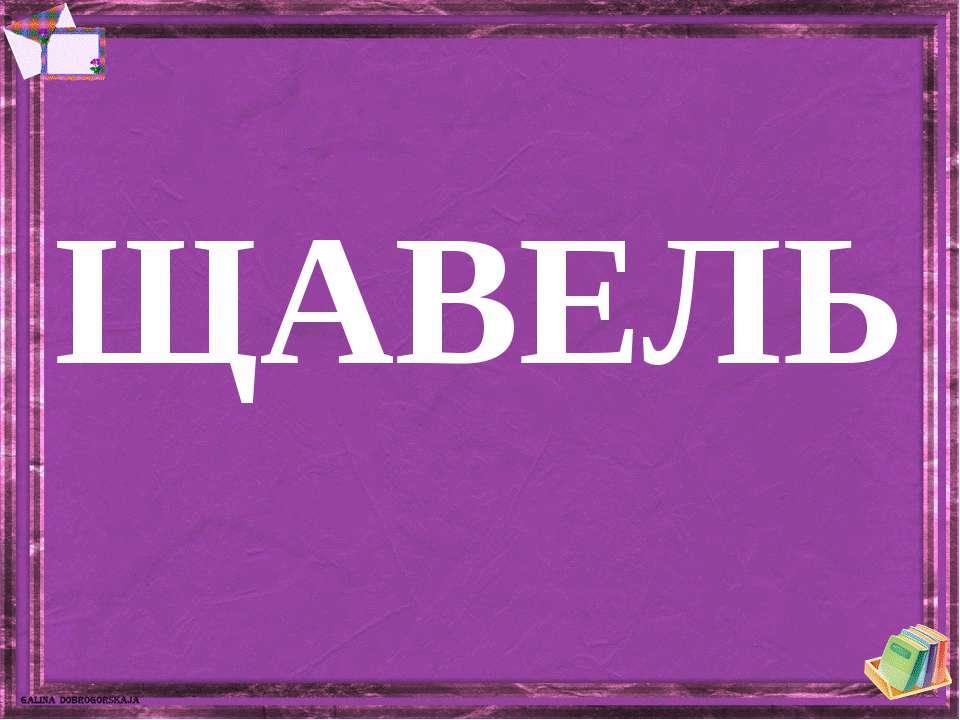 ЩАВЕЛЬ