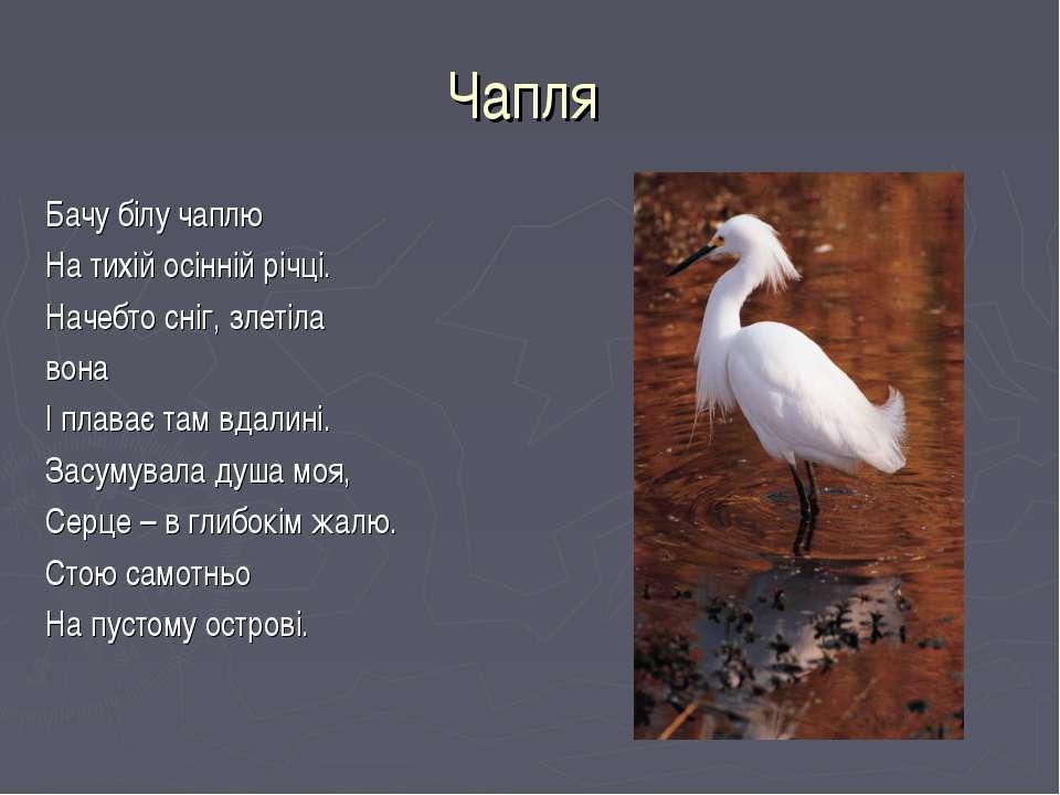 Чапля Бачу білу чаплю На тихій осінній річці. Начебто сніг, злетіла вона І пл...