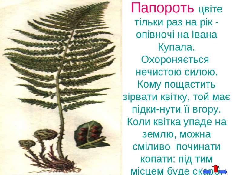 Папороть цвіте тільки раз на рік - опівночі на Івана Купала. Охороняється неч...