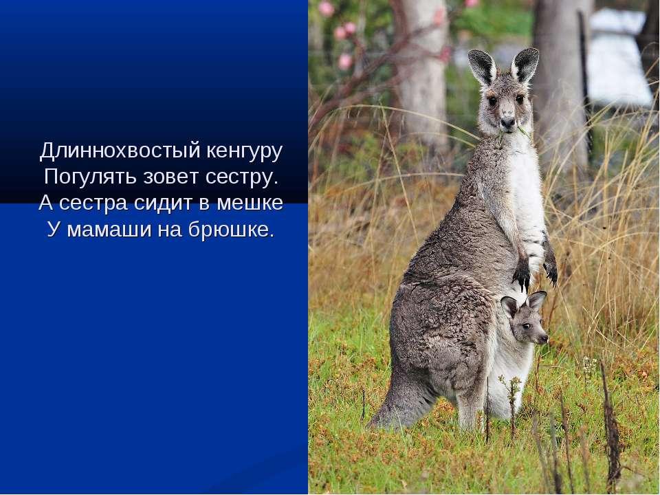 Длиннохвостый кенгуру Погулять зовет сестру. А сестра сидит в мешке У мамаши ...