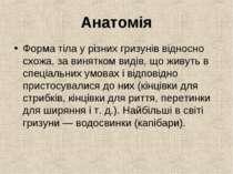 Анатомія Форма тіла у різних гризунів відносно схожа, за винятком видів, що ж...