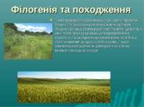Філогенія та походження Поява трав'янистих угруповань (луки, степи) протягом ...