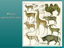 Жуйні парнокопитні савці