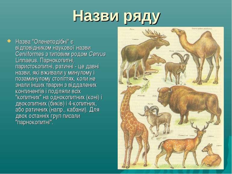 """Назви ряду Назва """"Оленеподібні"""" є відповідником наукової назви Cerviformes з ..."""