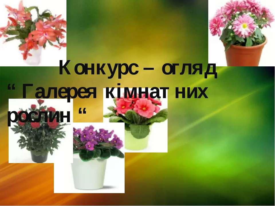 """Конкурс – огляд """" Галерея кімнатних рослин """""""