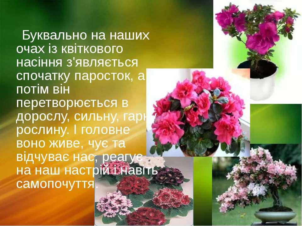 Буквально на наших очах із квіткового насіння з'являється спочатку паросток, ...