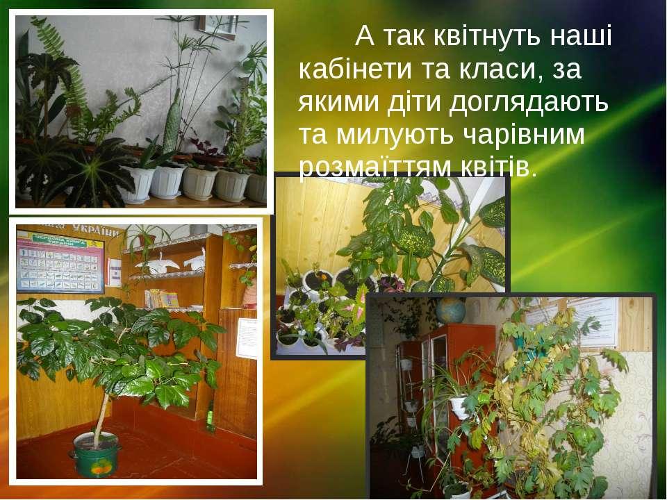 А так квітнуть наші кабінети та класи, за якими діти доглядають та милують ча...