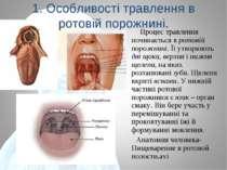 1. Особливості травлення в ротовій порожнині. Процес травлення починається в ...