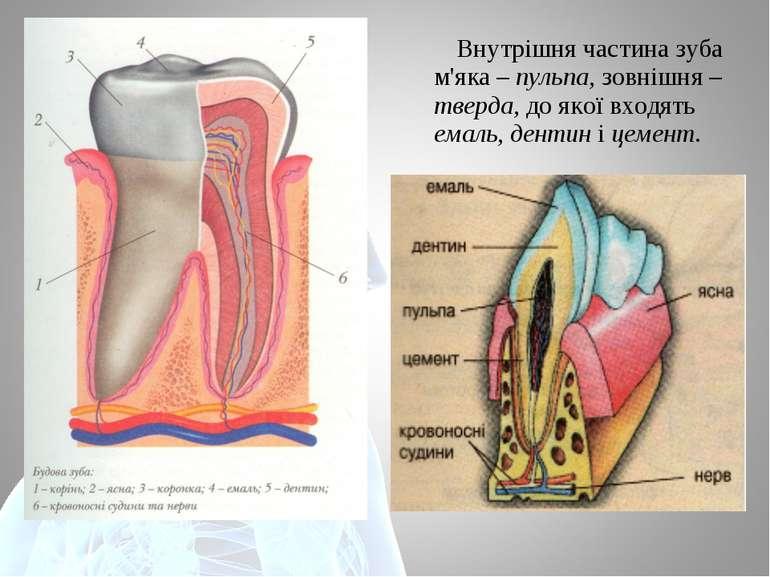Внутрішня частина зуба м'яка – пульпа, зовнішня – тверда, до якої входять ема...