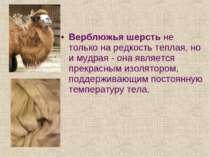 Верблюжья шерсть не только на редкость теплая, но и мудрая - она является пре...