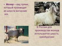 Мохер – вид пряжи, который производят из шерсти ангорских коз. В России для п...