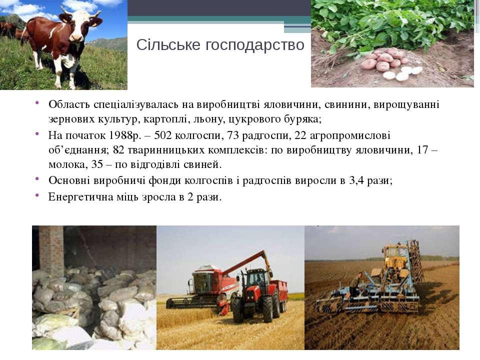 Сільське господарство Область спеціалізувалась на виробництві яловичини, свин...