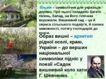 Вишня – символічне для українців дерево. Про нього складено багато пісень, ба...