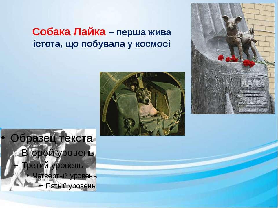 Собака Лайка – перша жива істота, що побувала у космосі