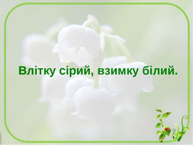 Влітку сірий, взимку білий.