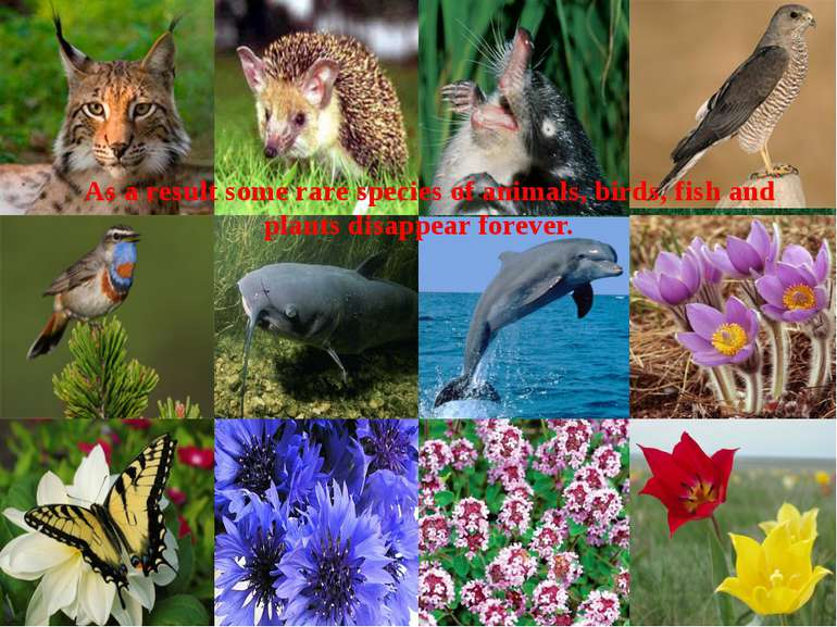 As a result some rare species of animals, birds, fish and plants disappear fo...