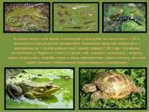 Близько чверті всіх видів земноводних і плазунів, які населяють США, знаходят...