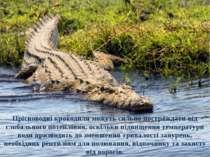 Прісноводні крокодили можуть сильно постраждати від глобального потепління, о...