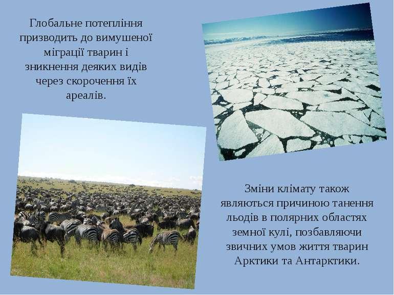 Глобальне потепління призводить до вимушеної міграції тварин і зникнення деяк...