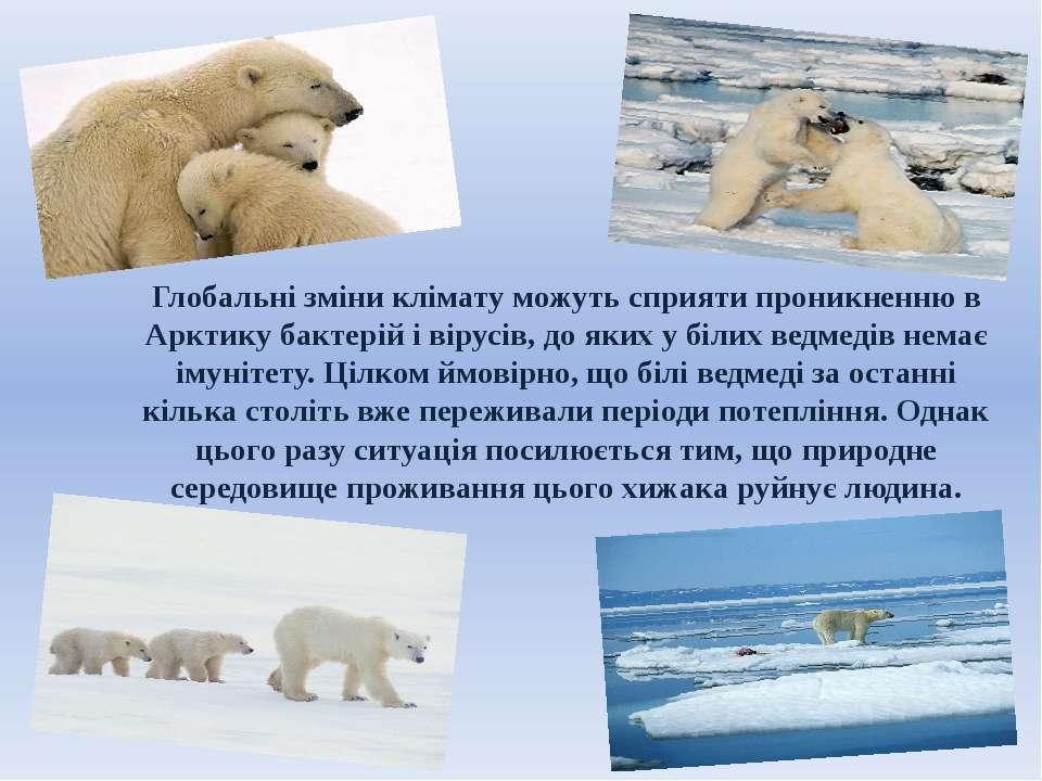 Глобальні зміни клімату можуть сприяти проникненню в Арктику бактерій і вірус...