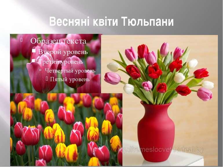 Весняні квіти Тюльпани