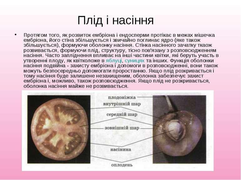 Плід і насіння Протягом того, як розвиток ембріона і ендосперми протікає в ме...