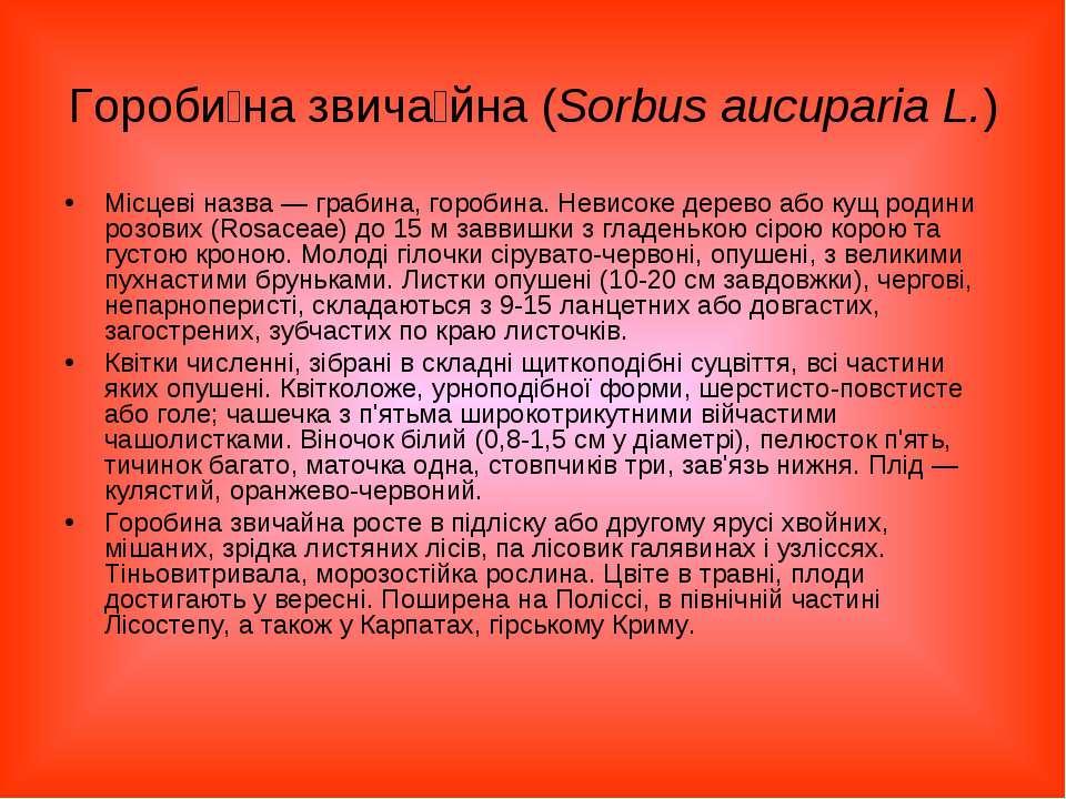 Гороби на звича йна (Sorbus aucuparia L.) Місцеві назва— грабина, горобина. ...