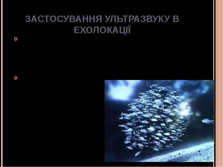 ЗАСТОСУВАННЯ УЛЬТРАЗВУКУ В ЕХОЛОКАЦІЇ У рибній промисловості застосовують уль...