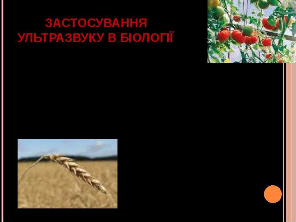 ЗАСТОСУВАННЯ УЛЬТРАЗВУКУ В БІОЛОГІЇ відділення клітини від ферментів. руйнува...