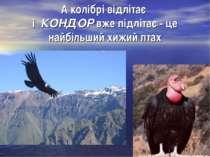 А колібрі відлітає і КОНДОР вже підлітає - це найбільший хижий птах