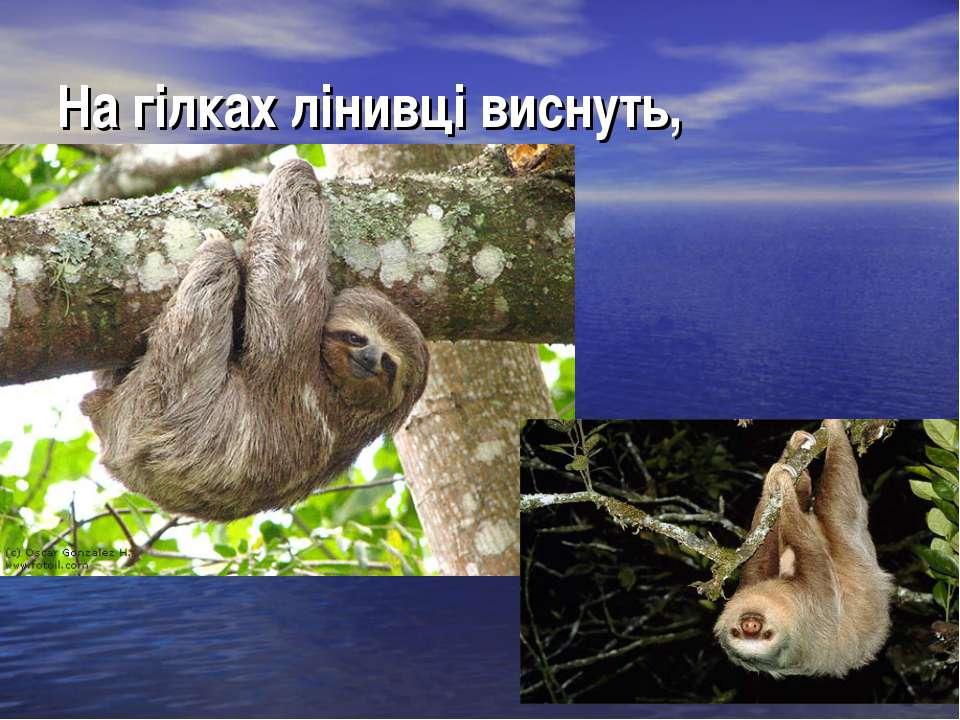 На гілках лінивці виснуть,
