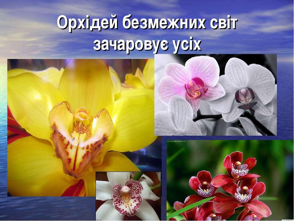 Орхідей безмежних світ зачаровує усіх