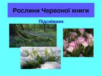 Рослини Червоної книги Підсніжник