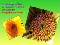 У соняшнику насіння розташоване по дугам, близьким до логарифмічної спіралі