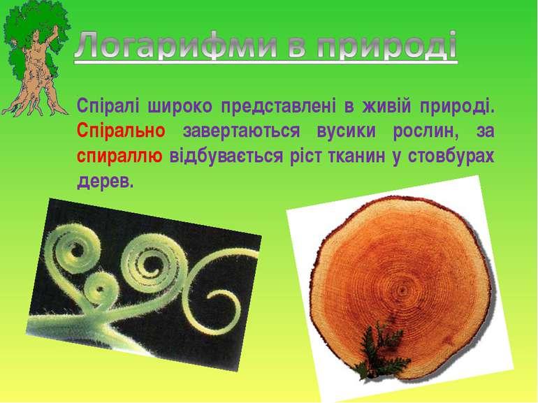 Спіралі широко представлені в живій природі. Спірально завертаються вусики ро...