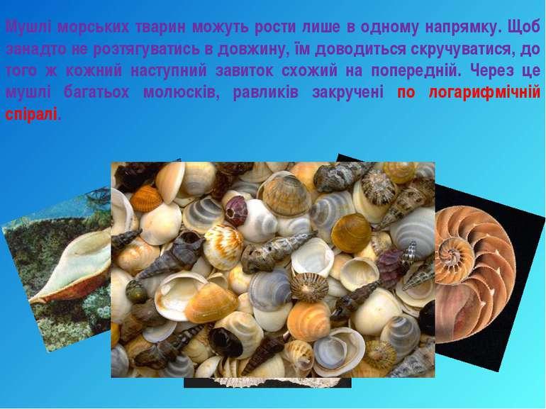 Мушлі морських тварин можуть рости лише в одному напрямку. Щоб занадто не роз...