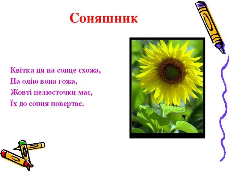 Соняшник Квітка ця на сонце схожа, На олію вона гожа, Жовті пелюсточки має, Ї...