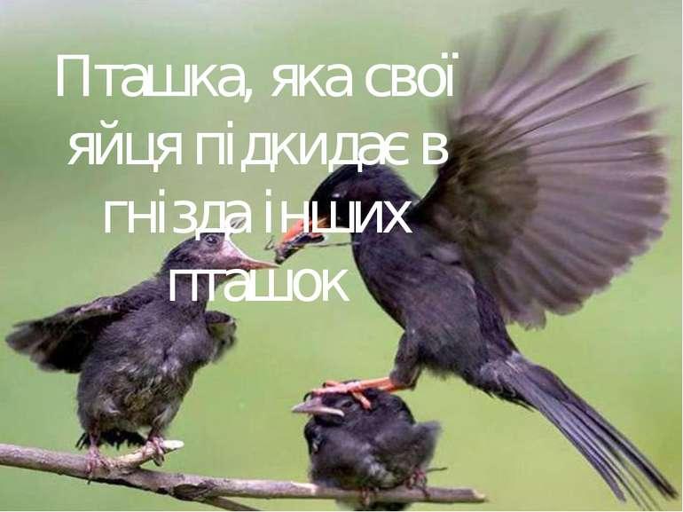 Пташка, яка свої яйця підкидає в гнізда інших пташок