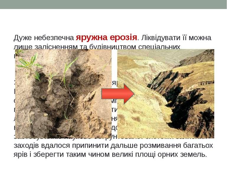 Дуже небезпечна яружна ерозія. Ліквідувати її можна лише залісненням та будів...